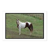Paint Horse 2 Postcards (Package of 8)