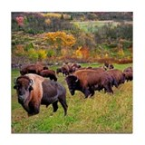 Bison Drink Coasters