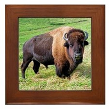 buffalo Framed Tile