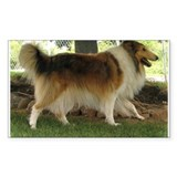 Lassie the Collie Rectangle Sticker 50 pk)