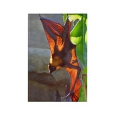 Fruit Bat Rectangle Magnet