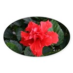 Red Hibiscus Oval Sticker