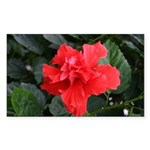 Red Hibiscus Rectangle Sticker