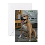 Dog Park Greeting Cards (Pk of 20)