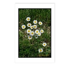 Heath Asters Postcards (Package of 8)