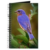 Eastern Bluebird Journal