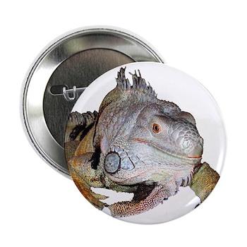 "iguana 2.25"" Button (10 pack)"