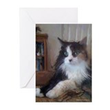 Maine Coon Tortoiseshell Greeting Cards (Pk of 10)