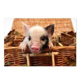 Pig Postcards (Package of 8)