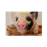 Cool Little pig farm Rectangle Magnet (10 pack)