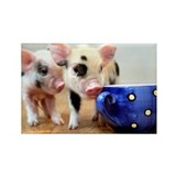 Micro pig Rectangle Magnet
