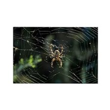 Western Orb Weaver Rectangle Magnet