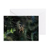 Western Orb Weaver Greeting Cards (Pk of 10)