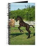 Cute Friesian cross Journal