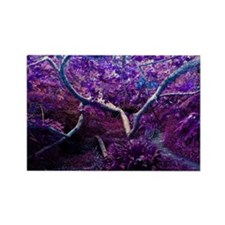 Natural Purple Tree and Blue Rectangle Magnet