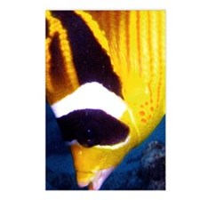 Butterfly Fish Postcards (Package of 8)