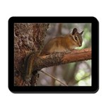 Chipmunk in a Tree Mousepad