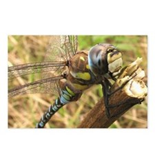 Dragonfly - A.mixta Postcards (Package of 8)