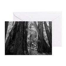 California Redwood Tree Trunks Black + White