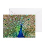 Peacock Greeting Cards (Pk of 10)