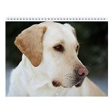 Labrador Retriever Wall Calendar - Beautiful Labs