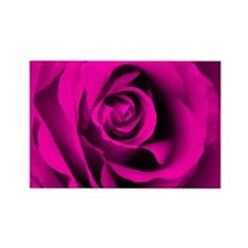 Pink Rose Rectangle Magnet