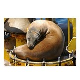 Cute Sealions Postcards (Package of 8)