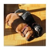Dachshunds Napping Tile Coaster