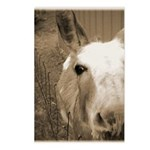 CUTEST DONKEY Postcards (Package of 8)