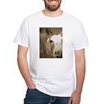 CUTEST DONKEY White T-Shirt