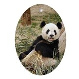 Giant Panda Bear Oval Ornament
