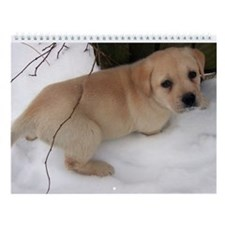Labrador Retriever Wall Calendar - Playful Puppies
