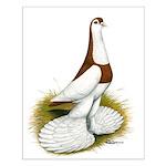 Australian Saddleback Pigeon Small Poster