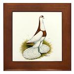 Australian Saddleback Pigeon Framed Tile