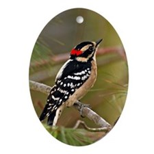 Cute Downy woodpecker Oval Ornament