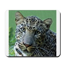 Leopard named Reno, Square Ph Mousepad
