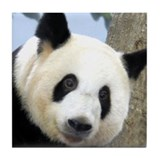 Panda Square Photo Tile Coaster