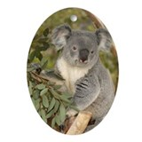 Koala Bear 4 Oval Ornament