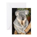 Koala Bear 3 Greeting Cards (Pk of 10)