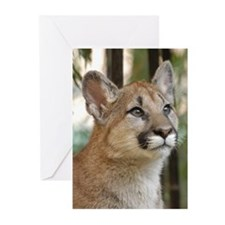 Cougar Cub 4 Greeting Cards (Pk of 10)