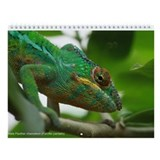 Chameleons of Madagascar 12-month Wall Calendar