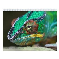 Highlights of Madagascar 12-Month Wall Calendar