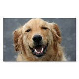 Mickey - Labrador - Photo 5 Rectangle Sticker 10