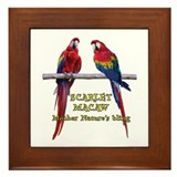 Macaw Bling Framed Tile