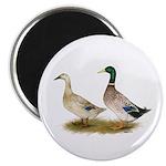 """Ducks: Silver Welsh Harlequi 2.25"""" Magnet (10"""