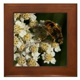 Yarrow Framed Tile