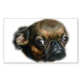 Smooth Brussels Griffon Rectangle Decal