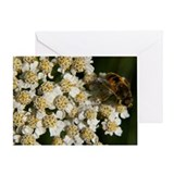 Yarrow Greeting Card