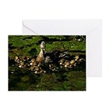 Baby Ducks 2 Greeting Card