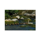 Baby Ducks 1 Rectangle Magnet (10 pack)